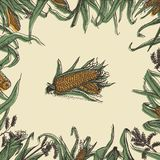 Kukurydzana kwiecista rama z kukurudz cobs i liśćmi royalty ilustracja
