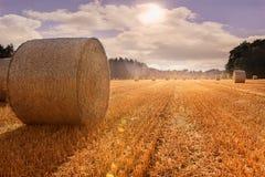 Kukurydzana odpowiada jesień z famos chmur niebem Zdjęcie Stock