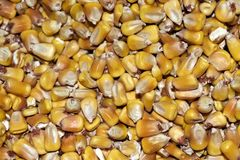 Kukurydzana tapeta - tło Obraz Stock
