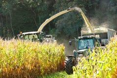 Kukurydzana uprawa przynosi wewnątrz Zdjęcia Royalty Free