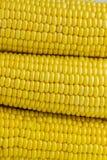 Kukurydzana zakończenie tekstura obrazy stock