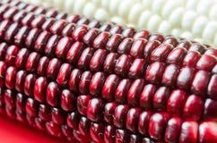 Kukurydzane fasole Zdjęcia Stock