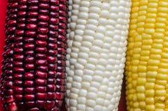 Kukurydzane fasole Zdjęcie Stock