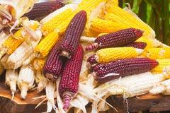 Kukurydzane Rośliny Obrazy Stock