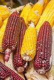 Kukurydzane Rośliny Fotografia Stock