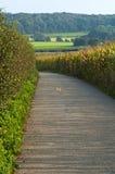 kukurydzanego pola ścieżka Obrazy Royalty Free