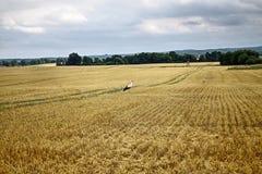kukurydzanego pola bociany Fotografia Royalty Free