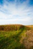 kukurydzanego pola lato Fotografia Stock