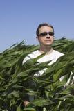 kukurydzanego pola mężczyzna Obrazy Stock