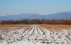 kukurydzanego pola poprzedni śnieg Zdjęcia Royalty Free