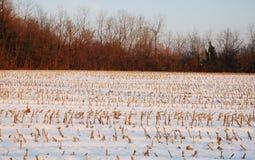 kukurydzanego pola poprzedni śnieg Zdjęcie Stock