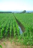 Kukurydzanego pola przykop Obrazy Royalty Free
