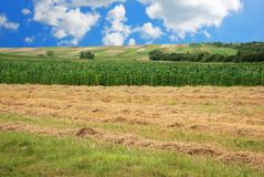 kukurydzanego pola siano zdjęcia stock