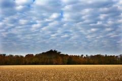 Kukurydzanego pola spadku żniwo Fotografia Stock