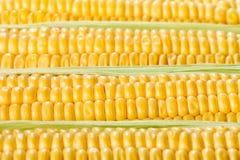 Kukurydzanego ucho nasiona Obraz Stock