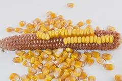 kukurydzanego ucho nasiona usuwający Zdjęcia Stock