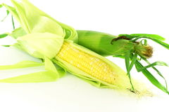 Kukurydzanego ucho zbliżenie w czystym białym tle Obrazy Stock