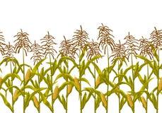 Kukurydzanej kukurydzy granicy wektorowy bezszwowy horyzontalny wzór Realistyczna botaniczna odosobniona ilustracja royalty ilustracja