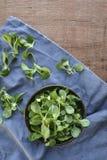 Kukurydzanej sałatki roślina, baranek sałaty Valerianella locusta, valeriana sałatka na drewnianym tle obraz stock