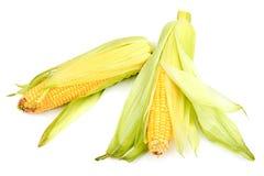 Kukurydzani cobs Obrazy Stock