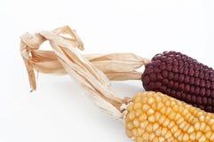 Kukurydzani cobs Zdjęcia Royalty Free