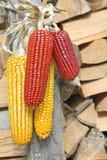 Kukurydzani cobs Zdjęcie Royalty Free