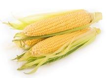 Kukurydzani cobs na białym tle Obraz Stock