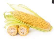 Kukurydzani cobs na białym tle Obrazy Stock