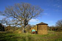 Kukurydzani cribs na wiejskim gospodarstwie rolnym w jesieni obrazy royalty free