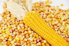 Kukurydzani i cynowani kukurydzani mais Obraz Stock