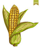 Kukurydzani kolory Obraz Stock
