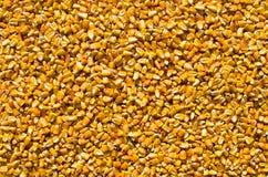 Kukurydzani nasiona Obraz Royalty Free