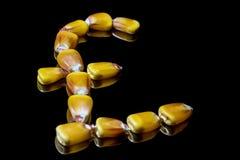 Kukurydzani nasiona tworzy Funtowego szterlinga symbol Kukurudza rynek Kukurudza ke Obrazy Royalty Free