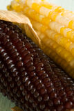kukurydzani ucho Zdjęcia Royalty Free
