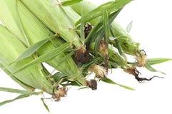 kukurydzani ucho Obraz Stock
