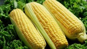 Kukurydzani ucho w zieleni zbiory wideo