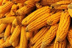kukurydzani udziały Obraz Stock