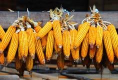 kukurydzani udziały Obrazy Stock