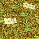 Kukurydzany bezszwowy wzór Zdjęcia Royalty Free
