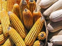 Kukurydzany cob Zdjęcia Royalty Free