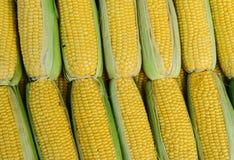 Kukurydzany cob Zdjęcie Stock