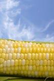 Kukurydzany Cob i niebieskie niebo Zdjęcia Stock