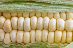 Kukurydzany cob (Zea Maj) Zdjęcie Stock