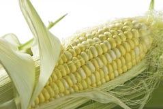 kukurydzany cukierki Zdjęcie Stock