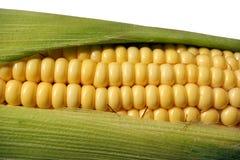 kukurydzany dojrzały smakowity Zdjęcie Stock