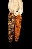 kukurydzany hindus Fotografia Stock
