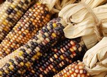 kukurydzany hindus Obrazy Stock