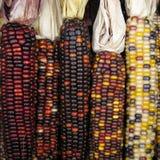 kukurydzany hindus Obraz Royalty Free