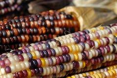 kukurydzany hindus Obrazy Royalty Free