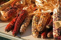 kukurydzany hindus Zdjęcia Stock